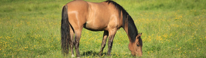 519 888-6503 info@horsebackadventures.ca
